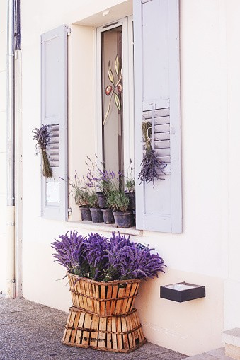 Fragrant Lavender Flowers and sprigs sitting in front of and hanging on a window