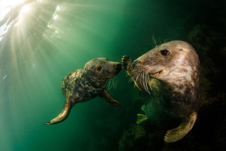 These are the stunning aquatic images that have wowed the judges at the annual Ocean Photography Awards 2021. // Photographer: Grant Thomas / Playful grey seals ??? a species that has been protected in the UK for decades under the Conservation of Seals Act 1970. / Location: Farne Islands, United Kingdom // TRIANGLE NEWS 0203 176 5581 // news@trianglenews.co.uk SHARKS smile for the camera, sleepy turtles glide through the sea and a fish puffs on a cigarette in these striking photos. The stunning snaps were honoured in the prestigious 2021 Ocean Photography Awards, which has just announced its winners. The annual awards focus on adventure, conservation and exploration of the deep blue sea.