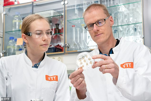 Elviira Kärkkäinen andHeiko Rischer look at their lab grown coffee biomass.Regulatory approval and introduction to the market are hurdles before lab-grown coffee can become a commercial product