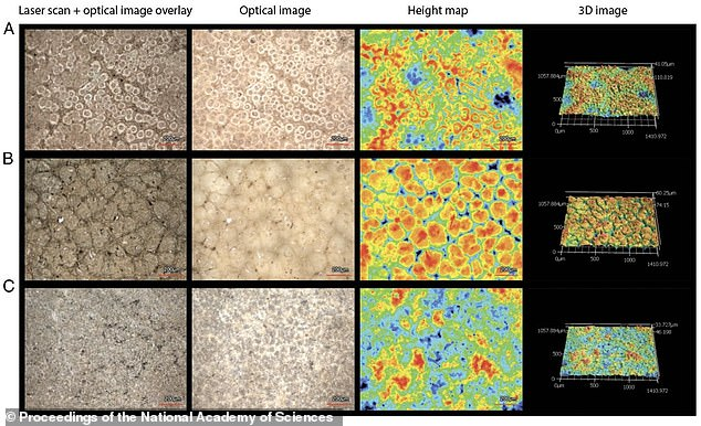 Images from the research paper, rendered through high-resolution laser microscopy scanning, show the cassowary eggshell interior surfaces