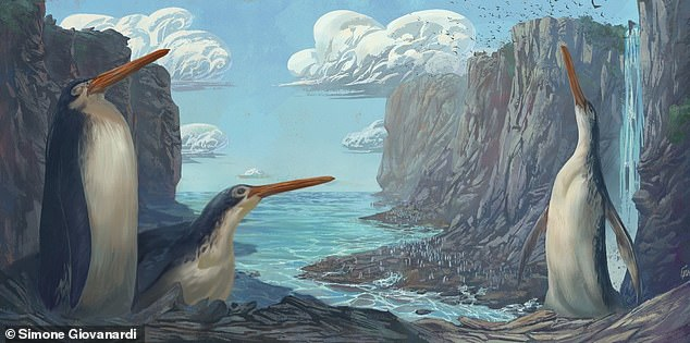 """A giant, human-sized penguin whose fossilised remains were first discovered by New Zealand school children has been revealed to be a previously-unknown species. Pictured: an artist's impression of how the 4' 7""""Kairuku waewaeroa might have looked during life"""