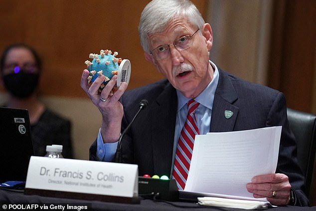 """Dr Francis Collins, director of the NIH, said that the long Covid research funding is a major step for patients who """"have had their lives completely upended"""" by the virus. Pictured: Collins holds up a coronavirus model while testifying on Capitol Hill, May 2021"""