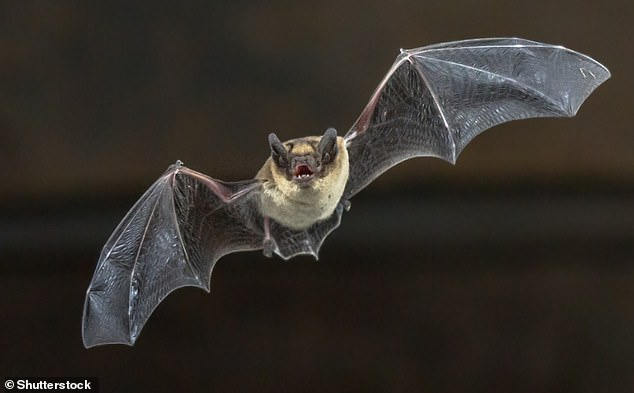 Inspiration: Ramezani came up with the idea after studying how bats take flight. He noticed that they can manipulate their wings into various shapes for increased agility