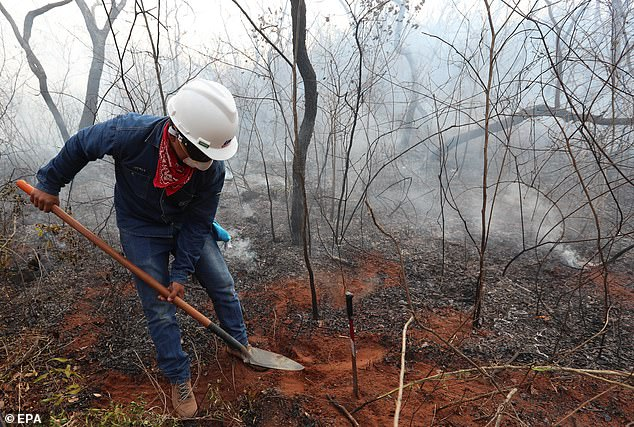 The vast size of the Amazon rainforest and the sheer quantity of the wildfire outbreaks makes halting its spread nigh on impossible. Dr Edward Mitchard, senior lecturer at the university of Edinburgh, told MailOnline it is unlikely Brazil has enough money to improve its protections of the Amazon