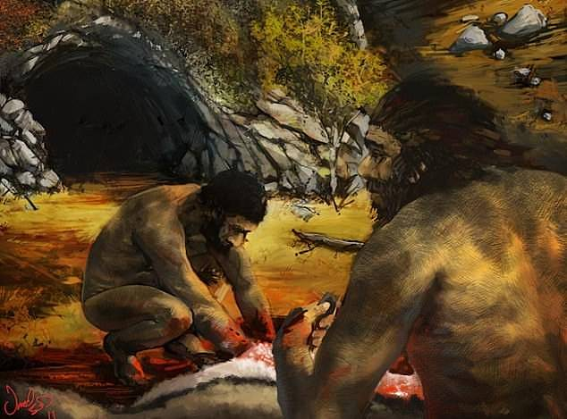 An excavation of the Grotta del Cavallo cave in southern Italy found our ancestors' superior spears and bows and arrows allowed them to kill animals easier than the primitive cavemen (Neanderthals preparing food pictured)