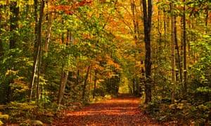 Canada, Ontario, Haliburton. Autumn colors on country road.