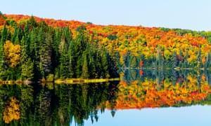 Autumn colours in Algonquin provincial park.