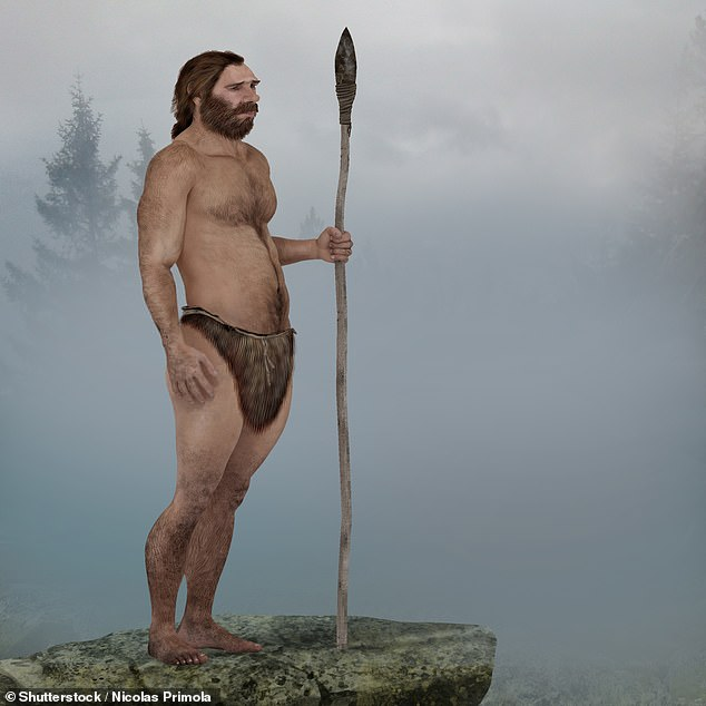 Neanderthals (drawing pictured) were wiped out because they lacked the cutting-edge hunting weapons wielded by homo sapiens, archaeologists have suggested
