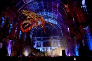 'Non-conventional venue' … the Natural History Museum.