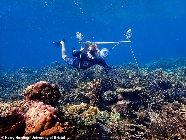 Dead patches on Australia's Great Barrier Reef could be revived by playing the ambient sounds of a healthy reef via loudspeakers to lure in young fish. Pictured, marine biologist Tim Gordon of the University of Exeter deploys an underwater loudspeaker onto the Great Barrier Reef