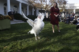 Butter walks in the Rose Garden before the pardoning ceremony on 26 November.