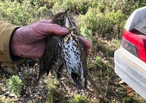 A hunter holds up a dead thrush