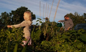 A little girl and her father work to water and harvest food in a kitchen garden.