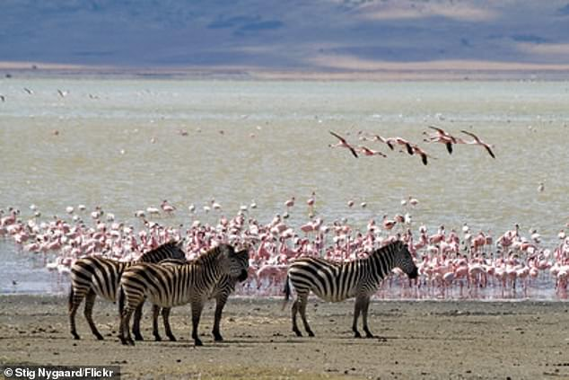Today these carbonate-rich lakes are biologically rich and support life ranging from microbes to Lake Magadi's famous flocks of flamingoes