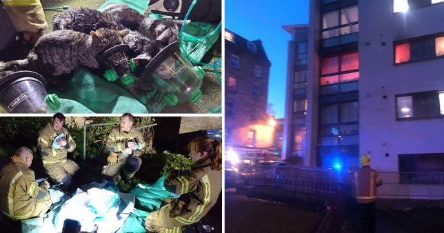 Kittens being given oxygen masks after being saved by firefighters