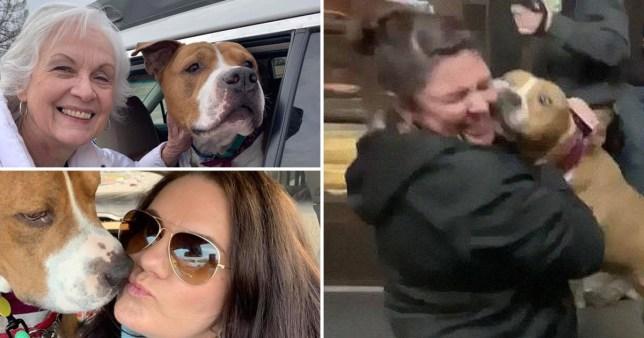 Stolen dog being returned by strangers