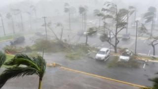 Trees toppled over in a parking lot in San Juan, Puerto Rico, on 20 September 2017