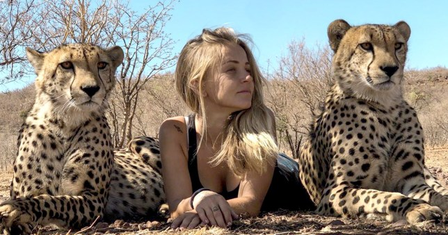 Kristen Kerr hanging out with cheetahs