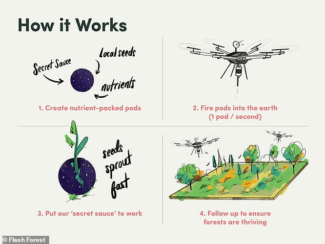 Flash Forest is a new initiative from a group of Canadian scientists who plan to use drones to plant a billion new trees by 2028