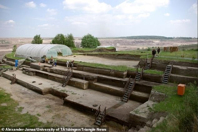 Overview of the excavation at Schöningen. Researchersattribute the discovery to the 'outstanding' preservation of wooden artefacts in the water saturated lakeside sediments in Schöningen