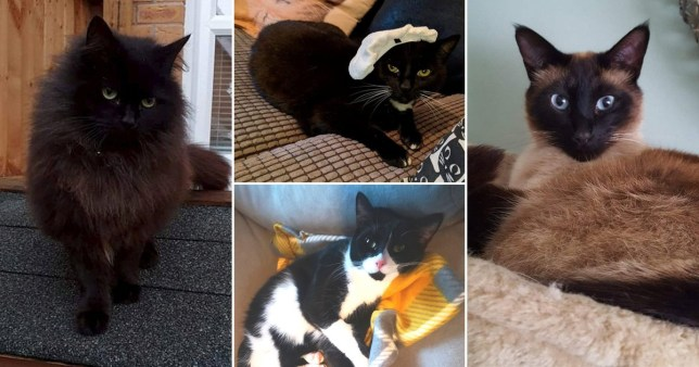 Four cats from Patina Way, Swadlincote, Derbyshire, who the RSPCA suspect were poisoned to death with antifreeze