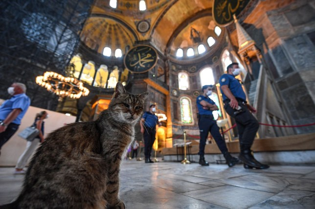 A cat sits inside the Hagia Sophia museum as Turkish police officers walk past in Istanbul, on July 10, 2020. - Turkey's top court considered whether Istanbul's emblematic landmark and former cathedral Hagia Sophia can be redesignated as a mosque, a ruling which could inflame tensions with the West. (Photo by Ozan KOSE / AFP) (Photo by OZAN KOSE/AFP via Getty Images)