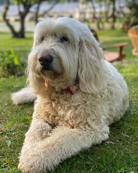 Furry friend: Oliver Spencer's dog.