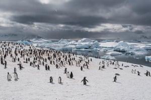 Penguins, Antarctic Peninsula