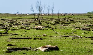 Thousands of red deer, wild horses and cattle starved each winter in a controversial Dutch rewilding experiment on the Oostvaardersplassen nature reserve.