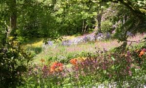 Southcombe Barn's colourful wildflower garden.