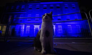 Larry the cat stands in front of 10 Downing Street in London as it is illuminated blue on Saturday evening as part of the NHS birthday celebrations