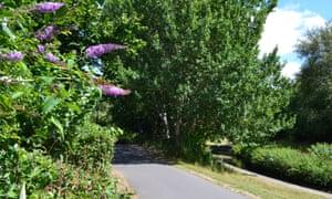 catford waterlink way cycle path near lower sydenham