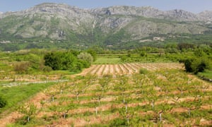 Vineyards in Konavle.