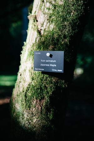 The majority of Arboretums are extensively labelled, allowing visitors to identify unfamiliar species.
