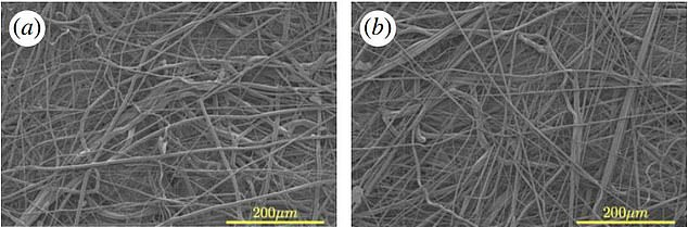 Pictured, microscope images of the electrocharged fabrics from (a) a commercial N95 respirator and (b) polypropylene fibres made with the modfied candy floss machine