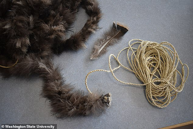 Turkey feathers began replacing rabbit skin as the preferred material for twined blankets about 2,000 years ago. They lasted longer and plucking turkey rather than skinning hares kept the animal alive and made them a renewable resource