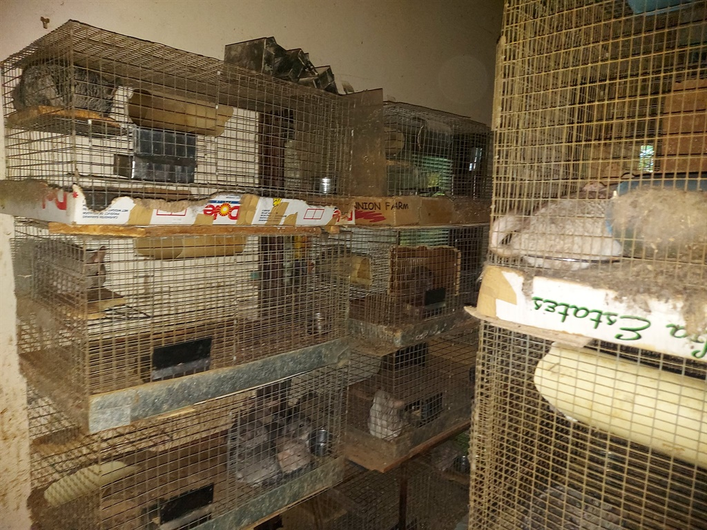 The cages that housed 150 exotic animals were kept in a home in Emmarentia