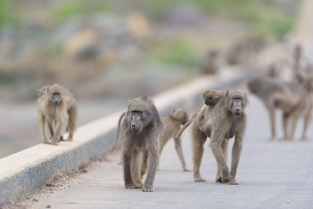 The City of Cape Town's baboon management plans have been labelled outdated.