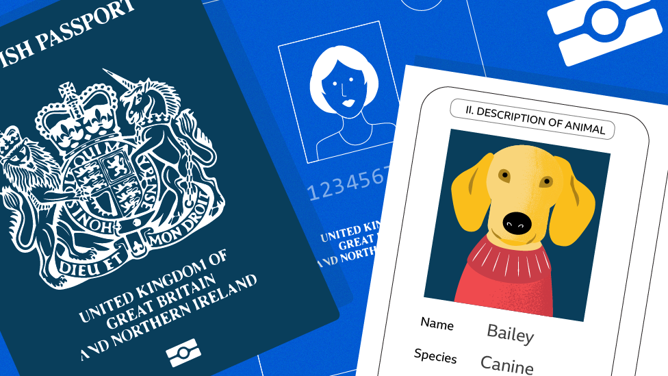 Current EU pet passport issued in the UK will not be valid for travel from 1 January 2021