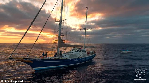 The crew work right until sundown looking for Perrins beaked whales - a totally different species from the one they ended up finding