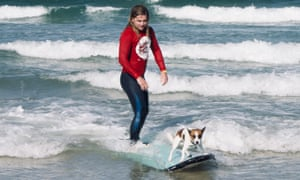 Surfer, and dog, both on a surfboard at Byron Bay, Australia.