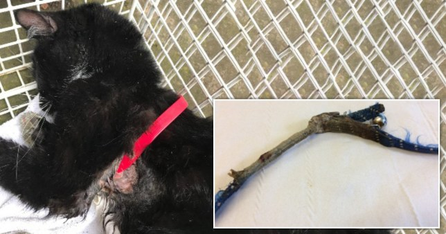 Pet owners warned about collars after cat gets stuck and dies from injuries