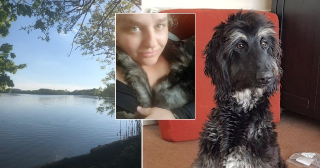 Pet owners warned after dog dies eating sausage stuffed with nails in park