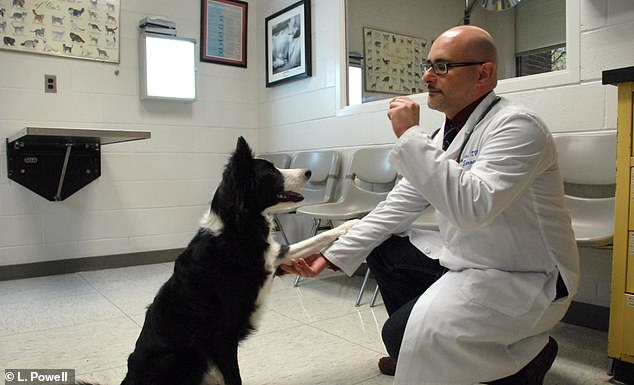 Dog demographics and owner personality influence how well a pet responds to treatment, helping veterinarians provide better diagnoses and guidance in the future