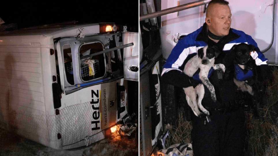 Pups rescued from crashed van
