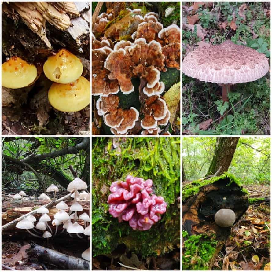 Six lockdown fungi finds