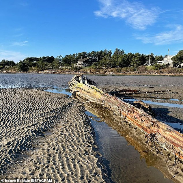 Calm: Another photo further down showed an overturned tree sitting in a pool of water next to rippling sand after the tide had gone out