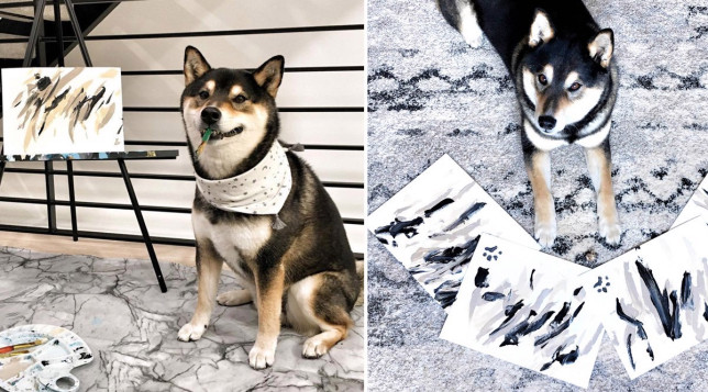 hunter the painting shiba inu with his artworks