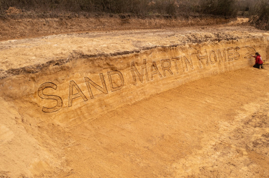 Conservationists build 400-tonne sandcastle in Surrey to attract sand martin birds