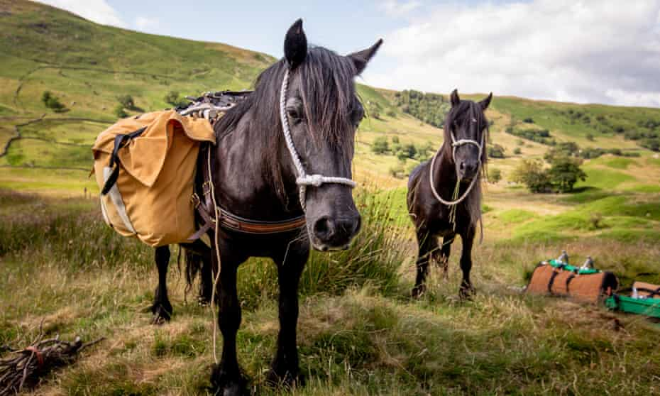 Walking with fell ponies in Cumbria.